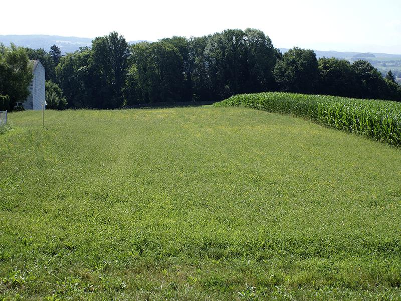 Grundstücke in Ybbs
